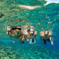 Family Snorkel Tours