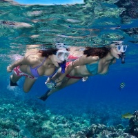 Private Snorkel Tours